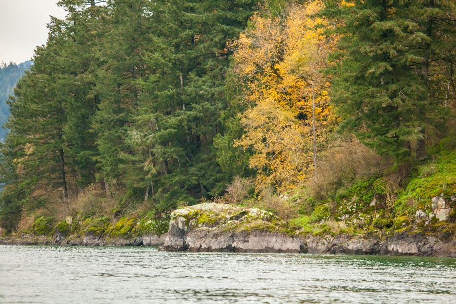 1740hl_fall_colours_on_harrison_river