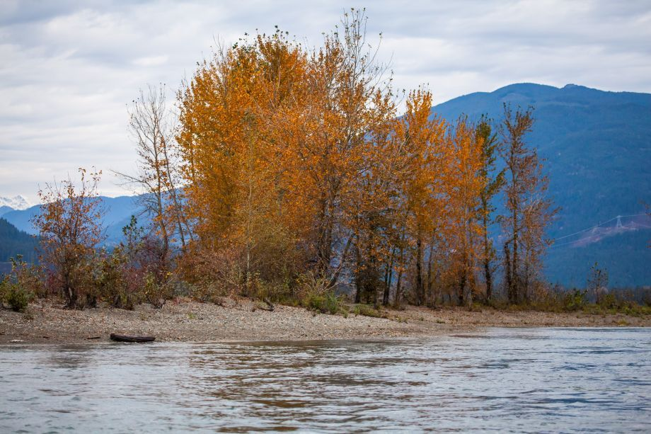 1749hl_fall_colours_on_harrison_river