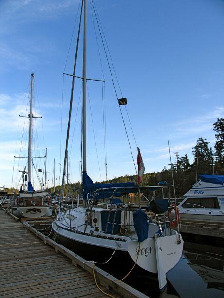 9881_loon_sailboat