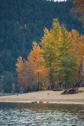 Fall colours on the Harrison River :: The LOONS Flyfishing Club