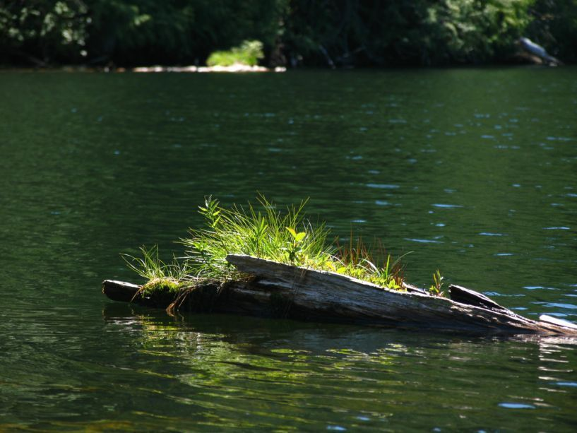 9820_Plants_on_Submerged_Log