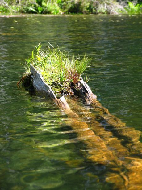 9833_Plants_on_Submerged_Log