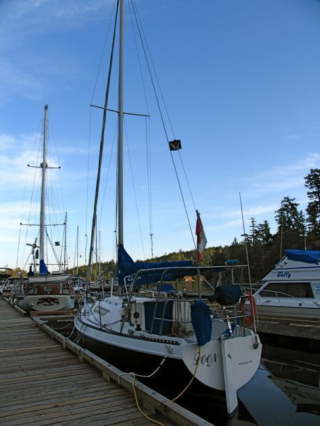 9881_LOON_Sailboat